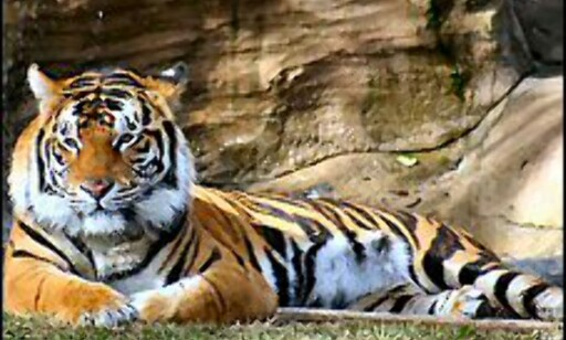 Foto: Tiger Wildlife Tours India Foto: Tiger Wildlife Tours India