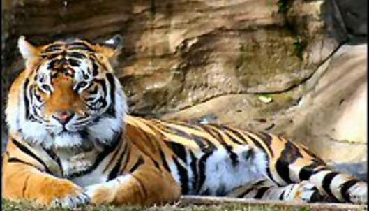 <i>Foto: Tiger Wildlife Tours India</i> Foto: Tiger Wildlife Tours India