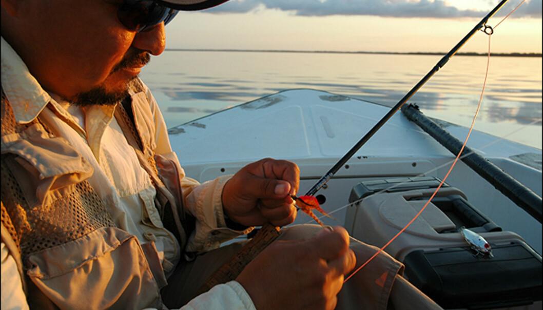 Nettopp fiske, og særs sportfiske, er en populær geskjeft i Campeche. Området og mangrovene nord og sør for byen, byr på tarpoon-fiske i verdensklasse. Tarpoon er en spreking som kan bli opp til 80-90 kilo tung, og ofte fiskes med fluestang. Her er fiskeguide og kaptein Victor Rodriguez i gang med morgenfiske.
