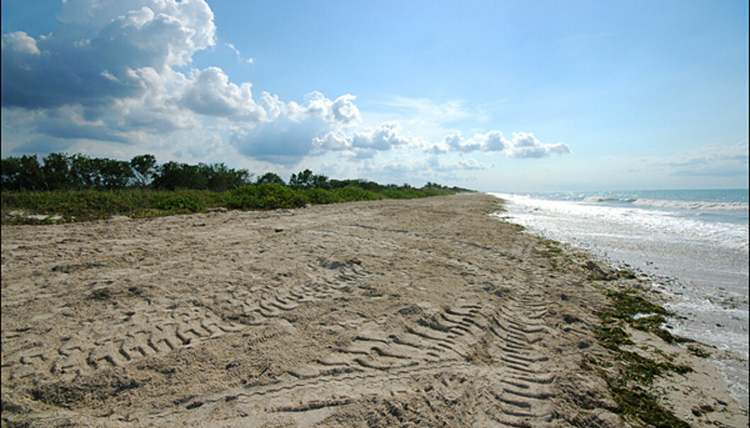 Campeche stat byr på kilometervis av sandstrender du kan ha fullstendig for deg selv. Dette bildet er tatt en times kjøring sør for Campeche by, hvor det planlegges et stort økologisk golf og spa-resort av en spansk utbygger(Grupo Mall). Området er også viktig for forskjellige typer skillpadder som bruker strendene til å hekke i juli og august. Strendene er kanskje ikke like fine som i Cancun (som ligger fem timers kjøring nordover) eller lengre ut i Karibien, men ikke verst. Over 70 prosent av det tropiske lavlandet i staten er fredet og gir opphav til en hel rekke spennende arter som puma og jaguar.