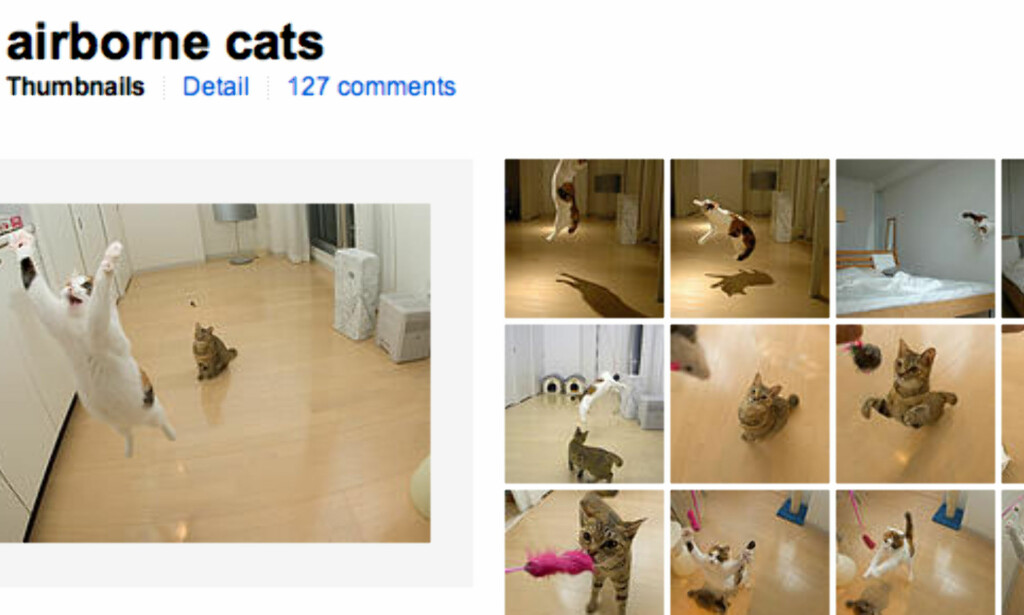 Airborne cats (faksimile, Flickr.com)