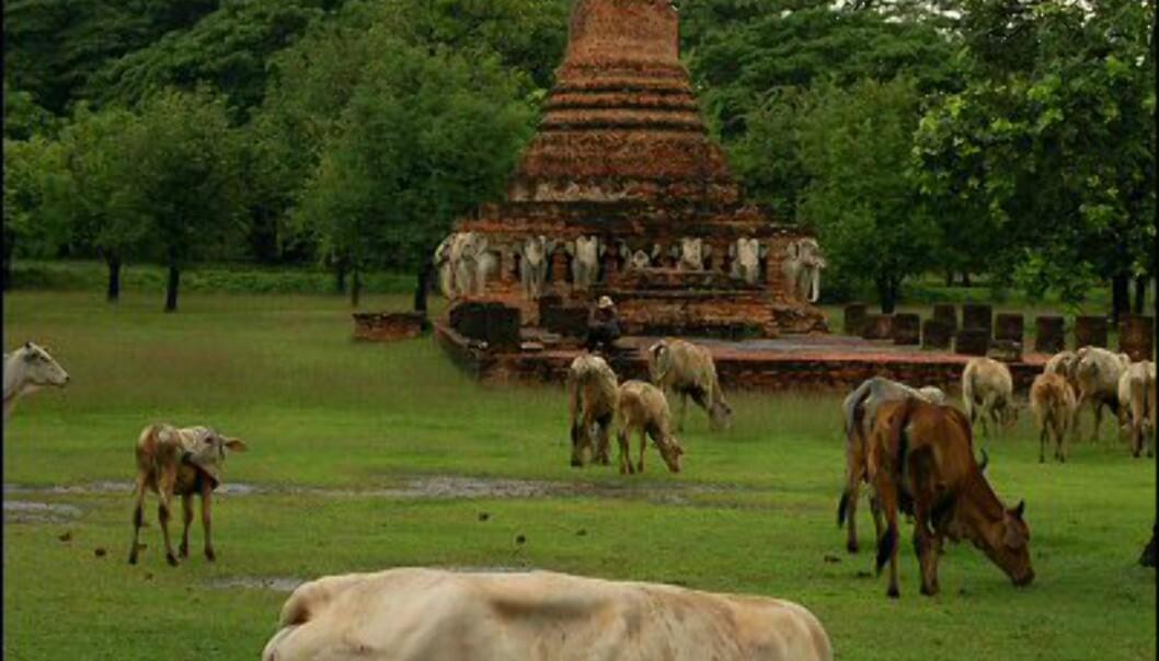 Gresset er grønnest rundt tempelbygningene.