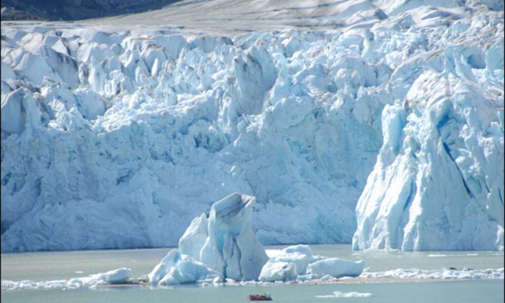 Isveggen raser i havet. Foto: Lars Brubæk