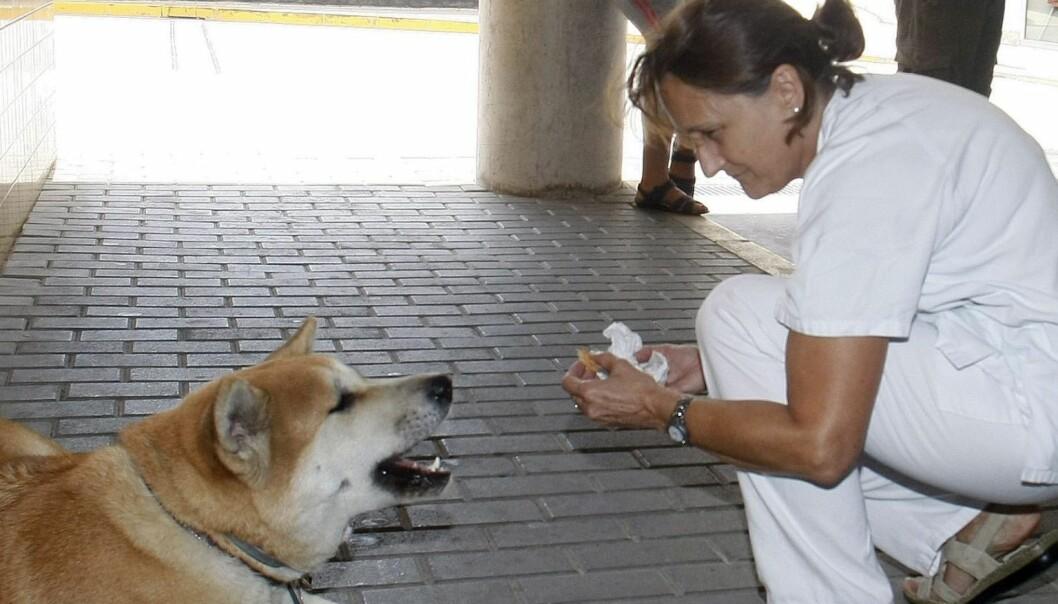 Da Sandra (22) ble innlagt på sykehus, nektet hunden Maya (2) å forlate henne