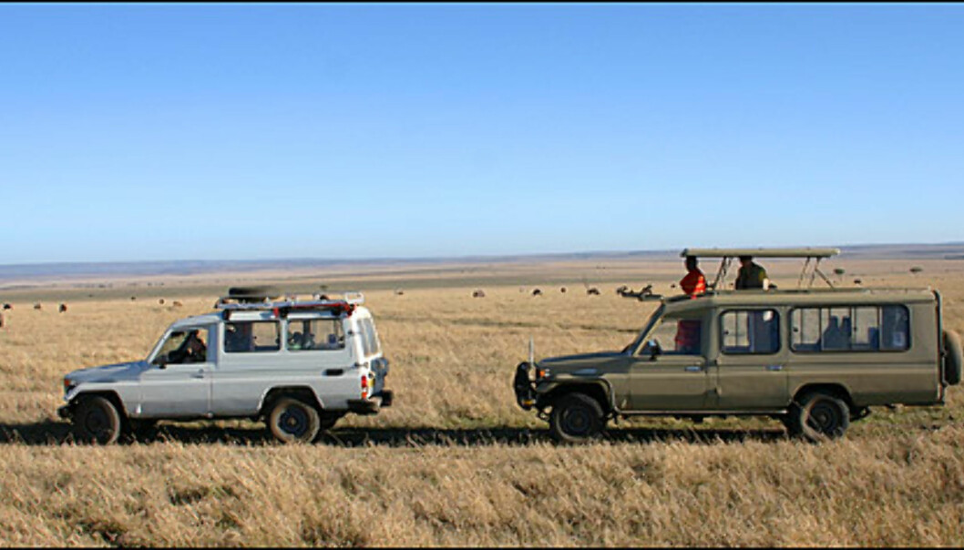 Såkalte gamedrives foregår vanligvis i minibusser eller firehjulstrekkere med mulighet for å felle opp taket.