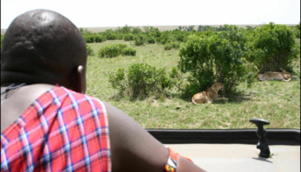 Noe av det som gjør afrikansk safari så spesielt, er nærheten man får til dyrene.