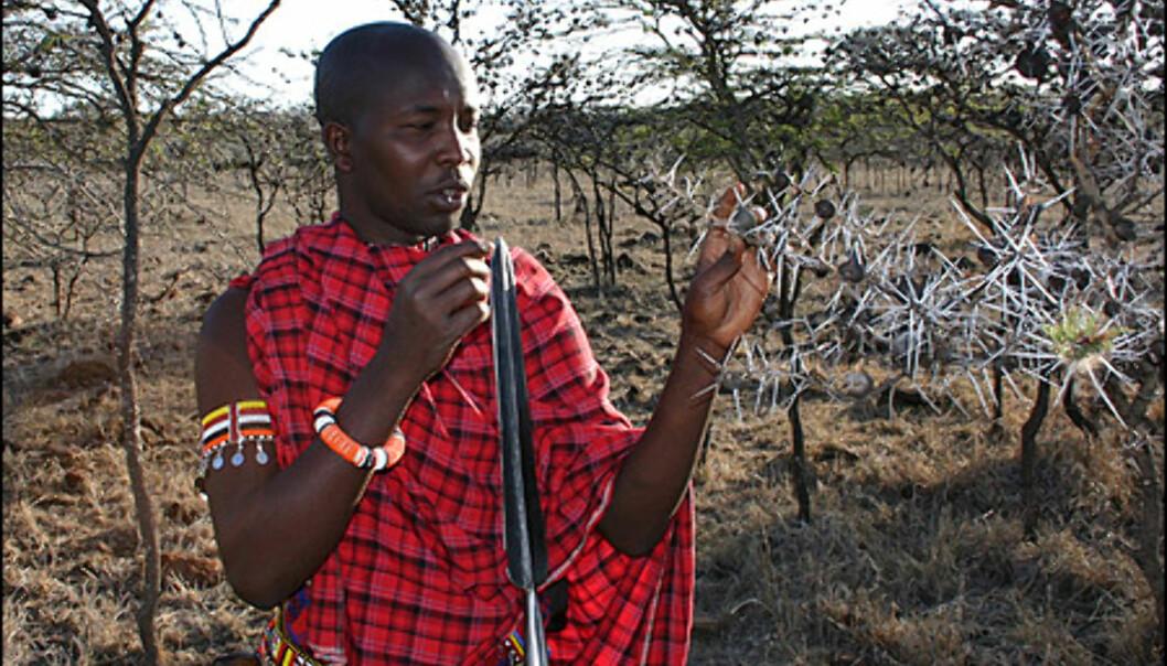 Fotsafari med masai-guider er en svært lærerik opplevelse.