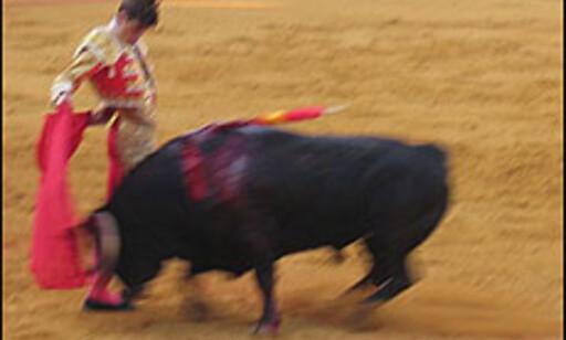- Toma ya, toro - ta den, tyr, skriker tyrefekteren til tyren.  Foto: Inga Holst Foto: Inga Holst