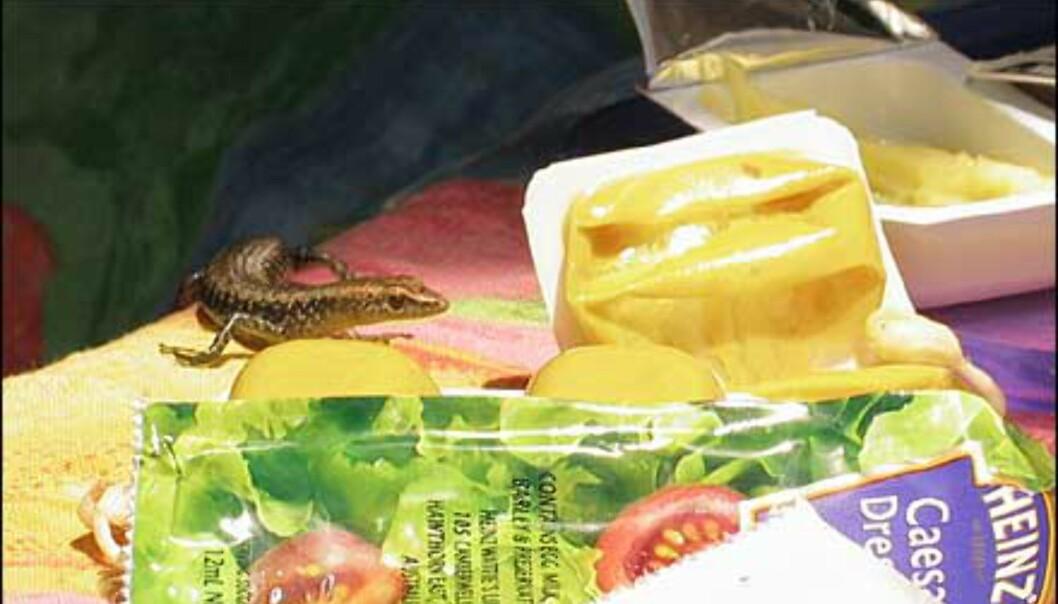 En liten en som invaderer frokostrestene. Foto: Sindre Storvoll