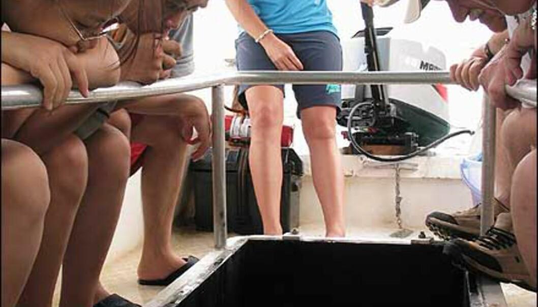 Vannaktiviteter for pyser - tur med glassbunnbåt. Foto: Sindre Storvoll