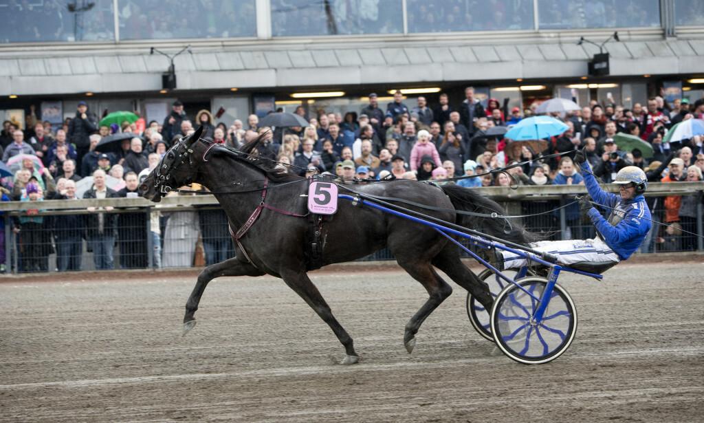 DOPINGTATT: Hesten Your Highness er en av fire hester som er tatt for doping. Her er den i aksjon under Olympiatravet på Åby. Foto: Frida Winter / TT / kod 9200/NTB Scanpix