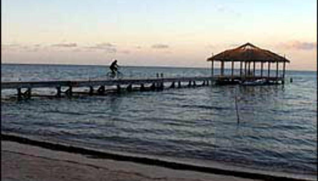 Roatan er kjent for både strender og dykkemuligheter. <I>Foto: Palmetto Bay Plantation</I> Foto: Palmetto Bay Plantation