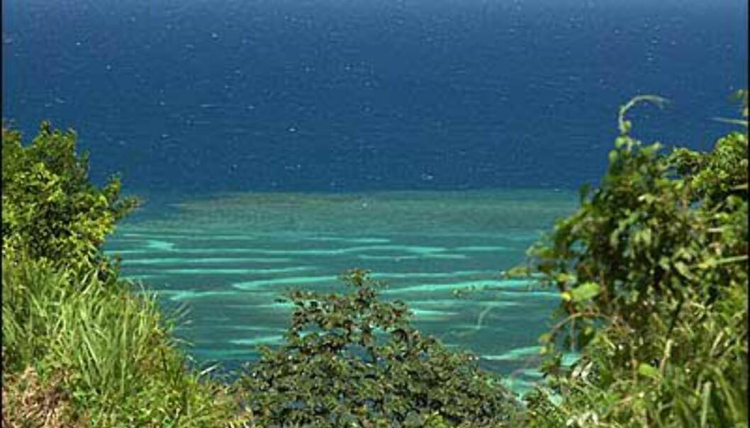 Korallrevene utenfor Roatan er av verdens største. <I>Foto: Palmetto Bay Plantation</I> Foto: Palmetto Bay Plantation