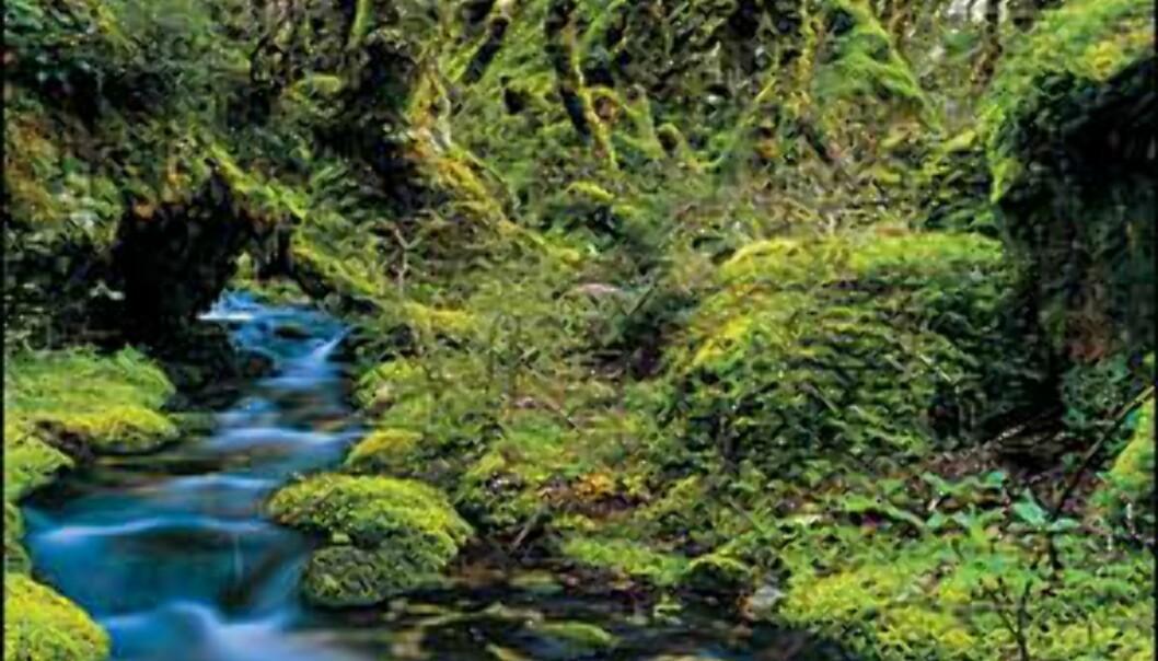 <I>Bilde: Gilbert van Reenen/Tourism New Zealand</I> Foto: Gilbert van Reenen/Tourism New Zealand