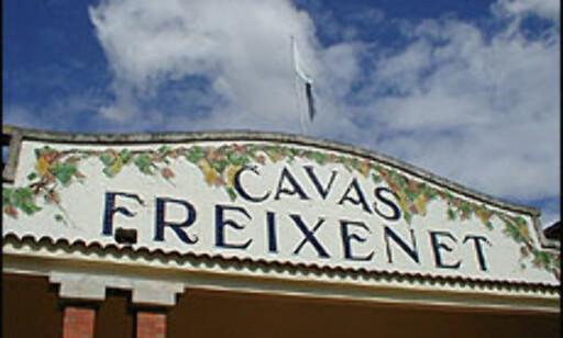 Familiebodegaen Freixenet er Spanias største vineksportør.  Foto: Inga Holst Foto: Inga Ragnhild Holst