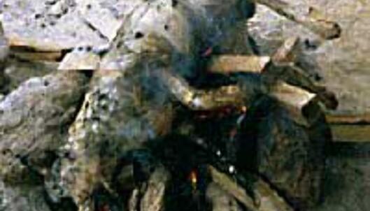 Hund på bålet - hundekjøtt spises flere steder i Asia. <I>Foto: Øyvind Paulsen</I> Foto: Øyvind Paulsen