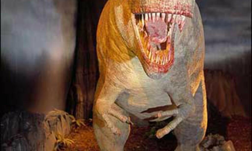 Foto: Natural History Museum