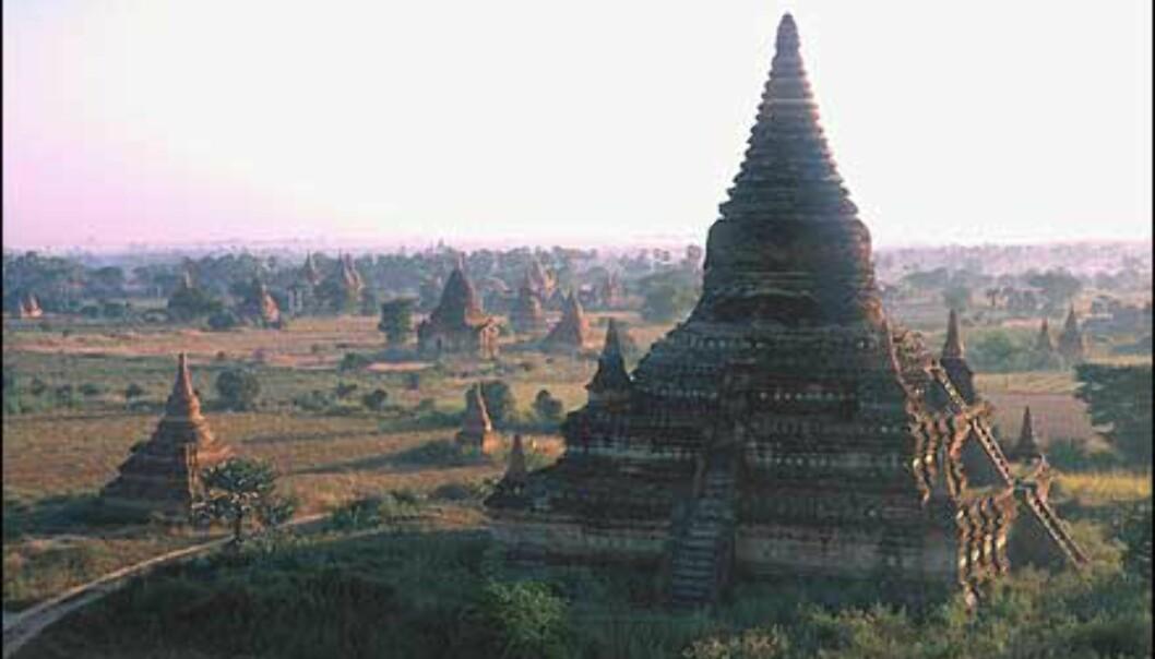 Tempelområdet i Bagan i soloppgang. Ruinene dekker omkring 42 kvadratkilometer, og har mer enn 2.000 monumenter. Området står på UNESCOs lister.<br /> <br /> <br /> <br /> - En av de store severdighetene i Asia, men er fortsatt ikke særlig kjent. Består av hundrevis av større og små templer som er fra 700 til 900 år gamle, forteller Stenersen. Foto: Haakon F. Stenersen