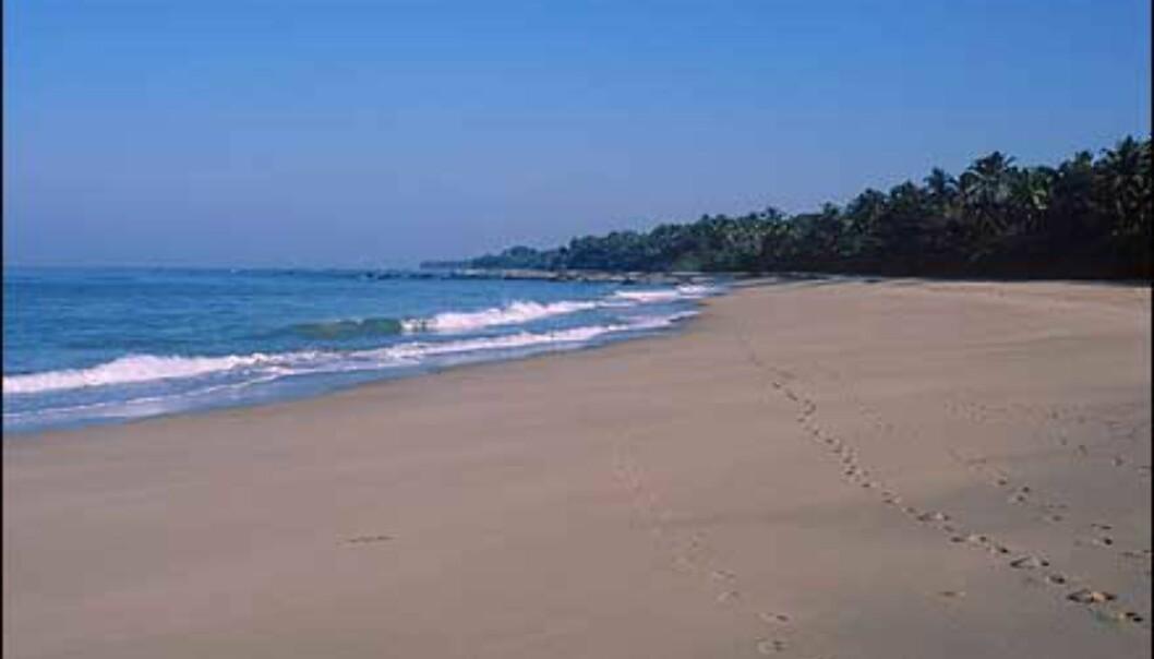 Chaungtha-stranden kan du oppleve å ha for deg selv.<br /> <br /> <br /> <br /> - Burma har flere bra strender langs vestkysten men innkvarteringen er ofte basic. Veldig bra dykking i Sørøst-Burma, men dårlig infrastruktur og mangel på innkvartering. Dessuten er det noe bandittvirksomhet som gjør at mange av øyene er off limit. Et dykkesenter var under utvikling i januar i år i Mergui, forteller Stenersen. Foto: Haakon F. Stenersen