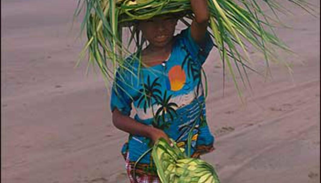 Stråhattselger på Chaungtha-stranden. Foto: Haakon F. Stenersen