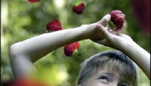 Jordbær fra himmelen.<br /> <I>Foto: John E. Githmark</I> Foto: John E. Githmark