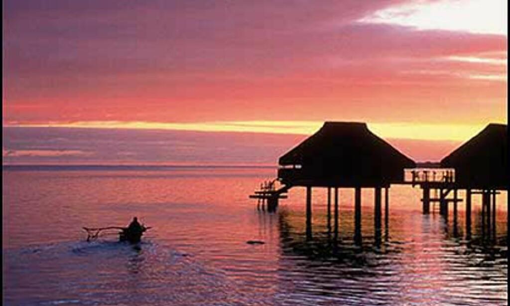"""Sheraton Moorea Lagoon Resort & Spa har 54 hytter eller fares på øya Moorea, Tahiti. Hyttene har privat """"utedusj"""" og glass i gulvet for fri oversikt over livet i vannet. Foto: Sheraton Moorea Lagoon Resort & Spa Foto: Sheraton Moorea Lagoon Resort & Spa"""
