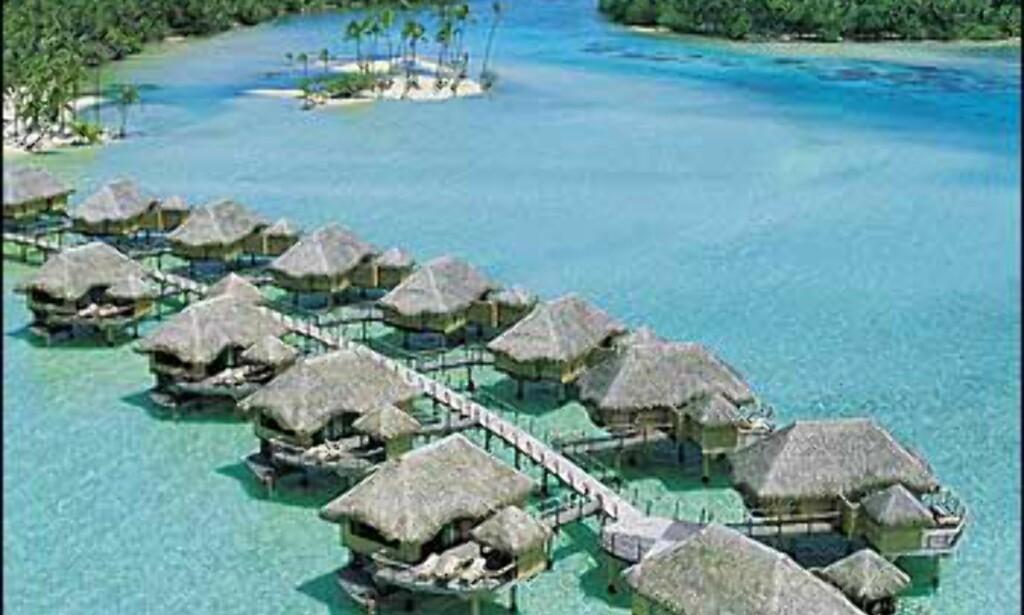 48 styltehytter på Taha'a på Society Islands. Foto: Taha'a Pearl Beach Resort & Spa Foto: Taha'a Pearl Beach Resort & Spa