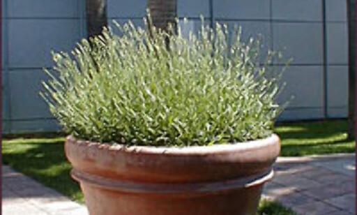 Førsteinntrykket, hagen, kan avgjøre et salg.  Foto: Inga Ragnhild Holst Foto: Inga Ragnhild Holst