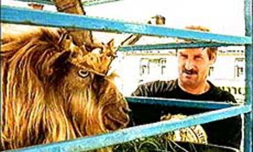 Geitekongen, King Puck, og en av undersåttene. Foto: puckfair.ie Foto: puckfair.ie