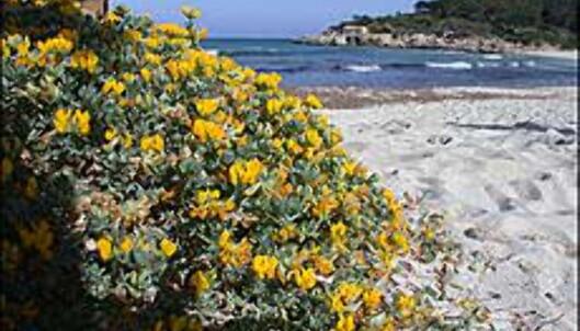 Det finnes flere områder med strand, uten hoteller. Som her på S'Amarador.