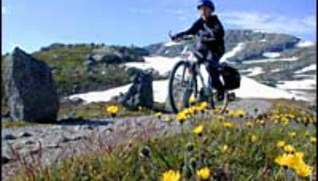 Syklistvennlig seng og spisested