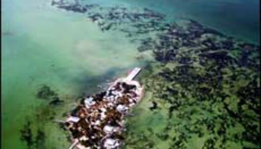 Klare forhold ved Belize.<br /> <I>Foto: Janecke Elton</I> Foto: Janecke Elton