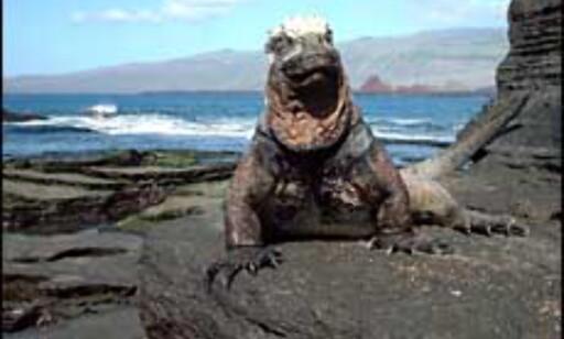Mye å se også over vann på Galapagos. Foto: Agnes Gram Foto: Agnes Gram
