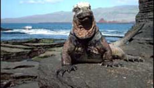 Mye å se også over vann på Galapagos.<br /> <I>Foto: Agnes Gram</I> Foto: Agnes Gram