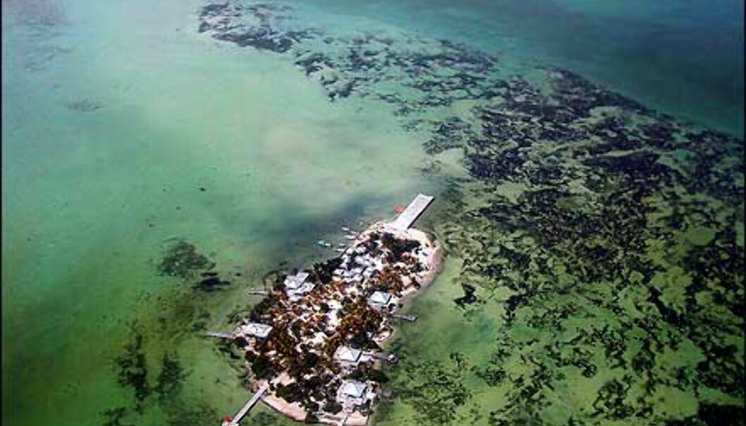 E: Korallrev i Belize - Janecke Elton Foto: Janecke Elton