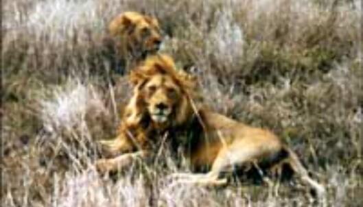 Safari i Tanzania?<br /> <I>Foto: Øien, Murstad, Johansen</I> Foto: Øien, Murstad, Johansen