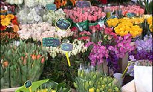 Blomsterløk og tulipaner er viktige eksportvarer for nederlenderne, og rundt om i Amsterdam er det ikke vanskelig å finne vakre avskårne blomster til salgs.