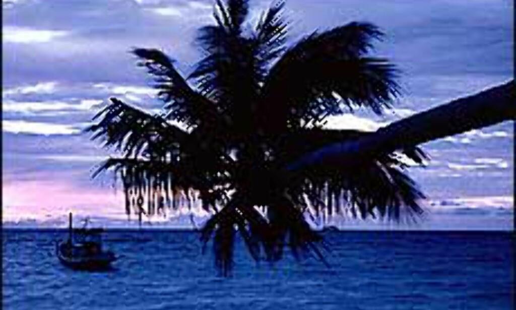 Hvem drømmer vel ikke om palmer og prektige solnedganger?<br /> <I>Foto: Morten Holbein</I>
