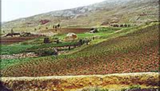 <strong>LAPPETEPPE:</strong> Grønnsaker av flere slag dyrkes på åkerlapper høyt opp i fjellene, uten moderne hjelpemidler.<br /> <I>Foto: Inga Holst</I>