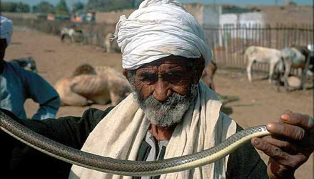 - Se på slangen. Mann i Aswan.<br /> <I>Foto: Haakon Stenersen</I> Foto: Haakon Stenersen