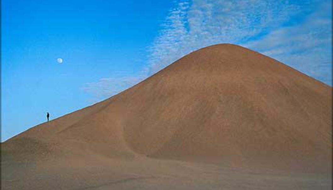 Alene i Sahara, utenfor oasen Farfara.<br /> <I>Foto: Haakon Stenersen</I> Foto: Haakon Stenersen