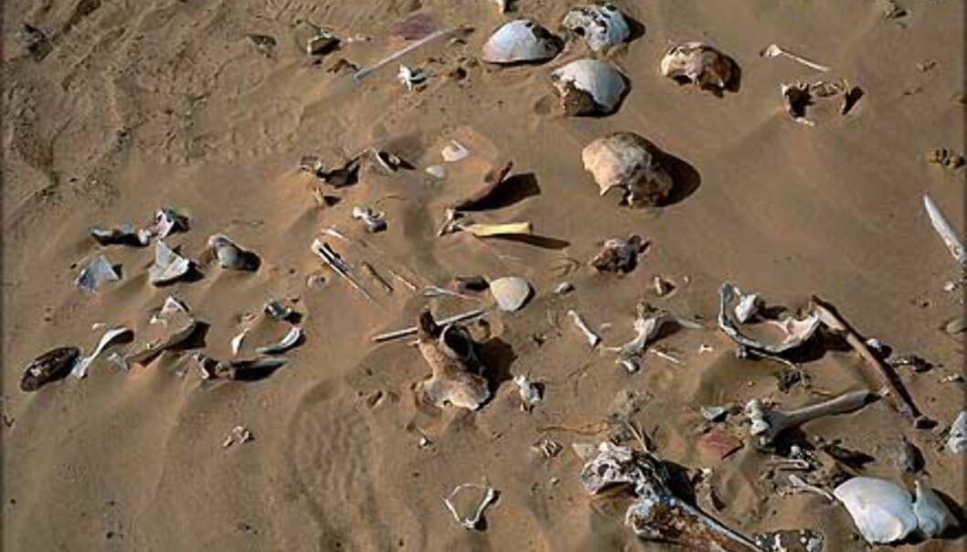 Death valley. Kharga - en av ørkenoasene i Egypt.<br /> <I>Foto: Haakon Stenersen</I> Foto: Haakon Stenersen