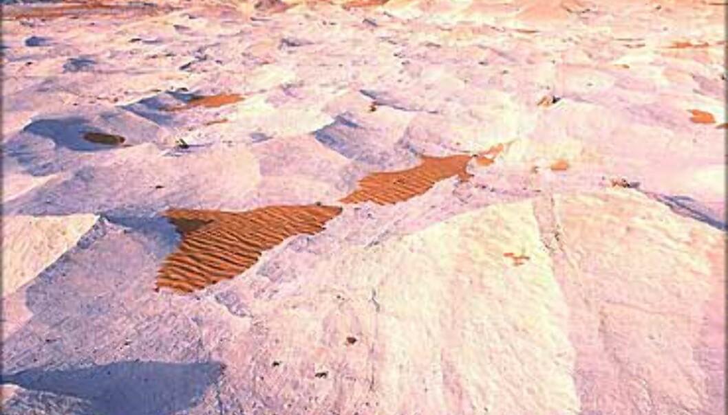 - Et fascinerende sted som jeg absolutt skal tilbake til, sier Stenersen om White Deserts kalkformasjoner.<br /> <I>Foto: Haakon Stenersen</I> Foto: Haakon Stenersen