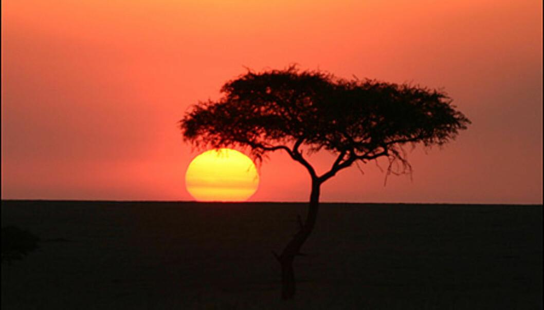Klassisk afrikansk solnedgang.