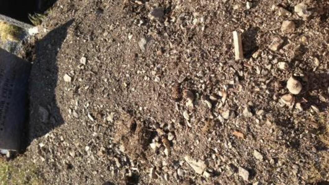 <strong>PÅ NYE GRAVER:</strong> Det var først og fremst på nye graver på gravlunden at Jensen og kjæresten fant flere beinrester søndag. Foto: Kent Are Jensen