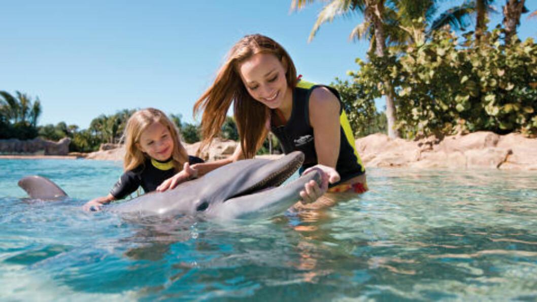 <strong> DISCOVERY COVE:</strong>  Å bade med delfiner i SeaWorld Orlando er en av Floridas mest spennende opplevelser. Foto: TROY HOUSE / SEA WORLD ORLANDO