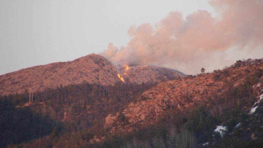 <strong>UTE AV KONTROLL:</strong> To skogshelikoptre, frivillige og 35 personer fra brannvesenet jobber på spreng for å slukke flammene i Vårlivarden i Sandnes. I en pressemelding skriver brannvesenet i Sør-Rogaland nå at brannen blusset opp igjen i dag morges.  Foto: Hans Martin Fondevik Forland