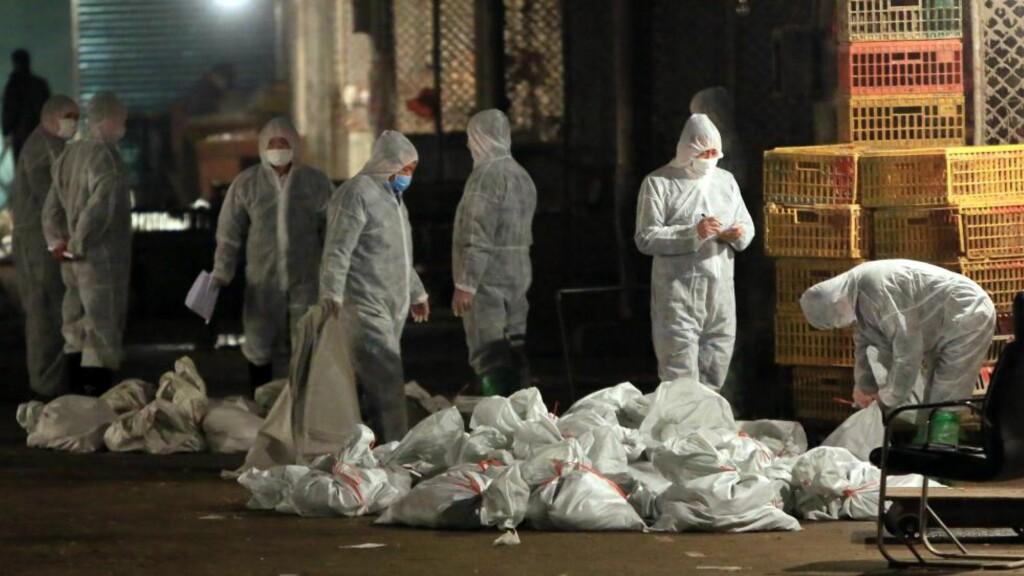 FUGLEINFLUENSA: Myndighetene i Shanghai har iverksatt kriseplaner og beordret masseslakt av fugler på markeder i byer. Av 14 registrerte smittetilfeller hos mennesker er seks bekreftet døde - så langt. Foto: AFP / NTB Scanpix