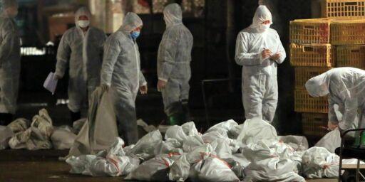 image: Slår alarm om en ny type fugleinfluensa