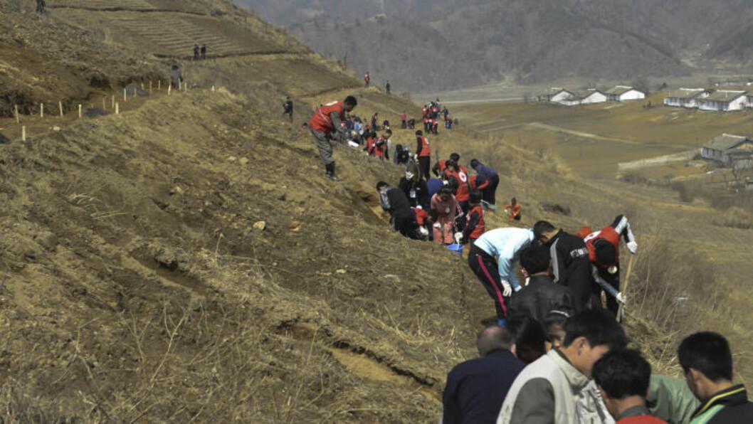 <strong>TREPLANTING:</strong> Store deler av Nord-Korea er avskoget for å dyrke mat. Det får alvorlige konsekvenser under regntiden hver sommer, da åssider uten trær fører til mange jordras og flom i dalene.